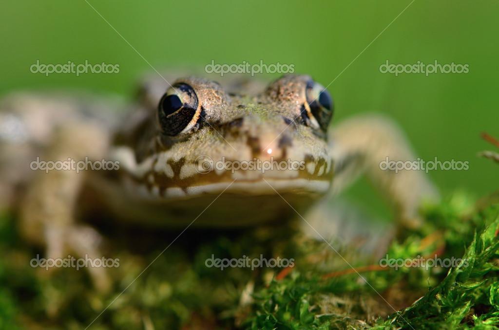 anfíbios stock photo turtleman 13579802