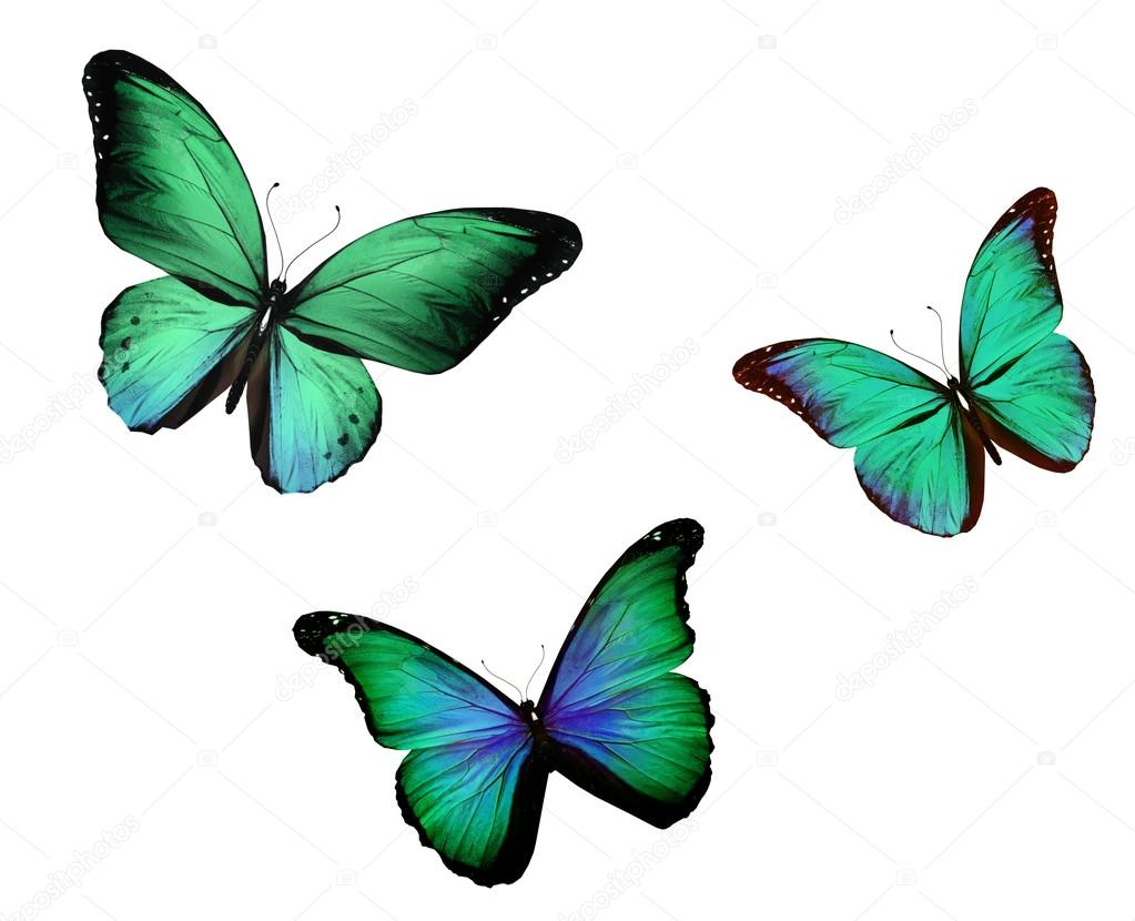 Three turquoise butterfly , isolated on white background