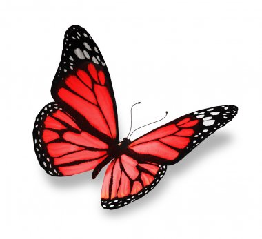 Red butterfly, isolated on white background stock vector