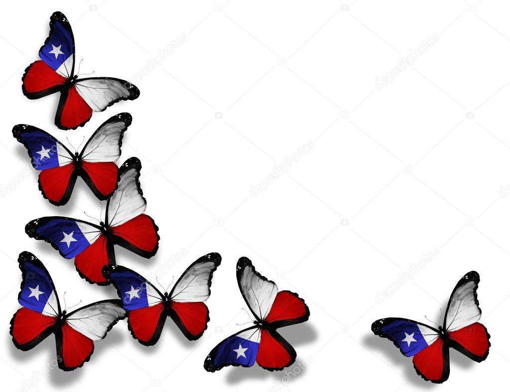 Chilean flag butterflies, isolated on white background