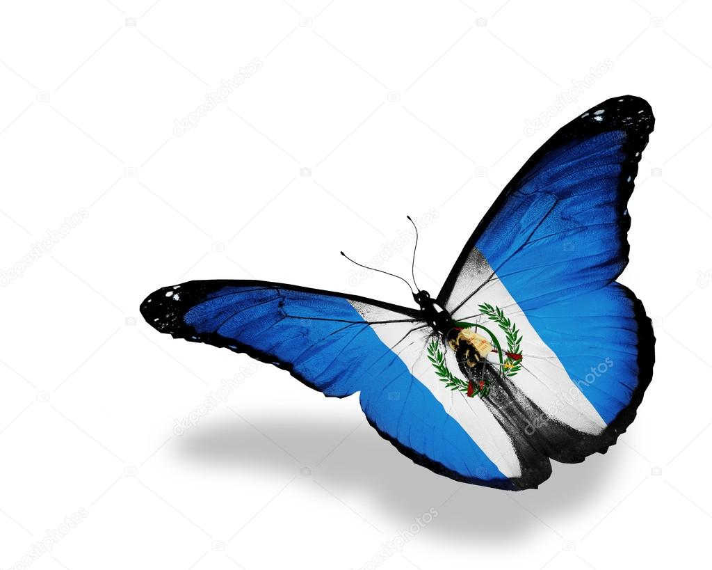 Guatemala flag butterfly flying, isolated on white background