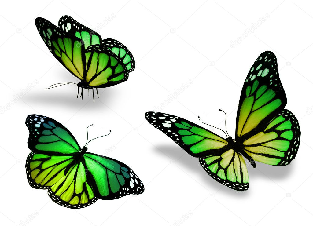 Three green yellow butterfly, isolated on white background
