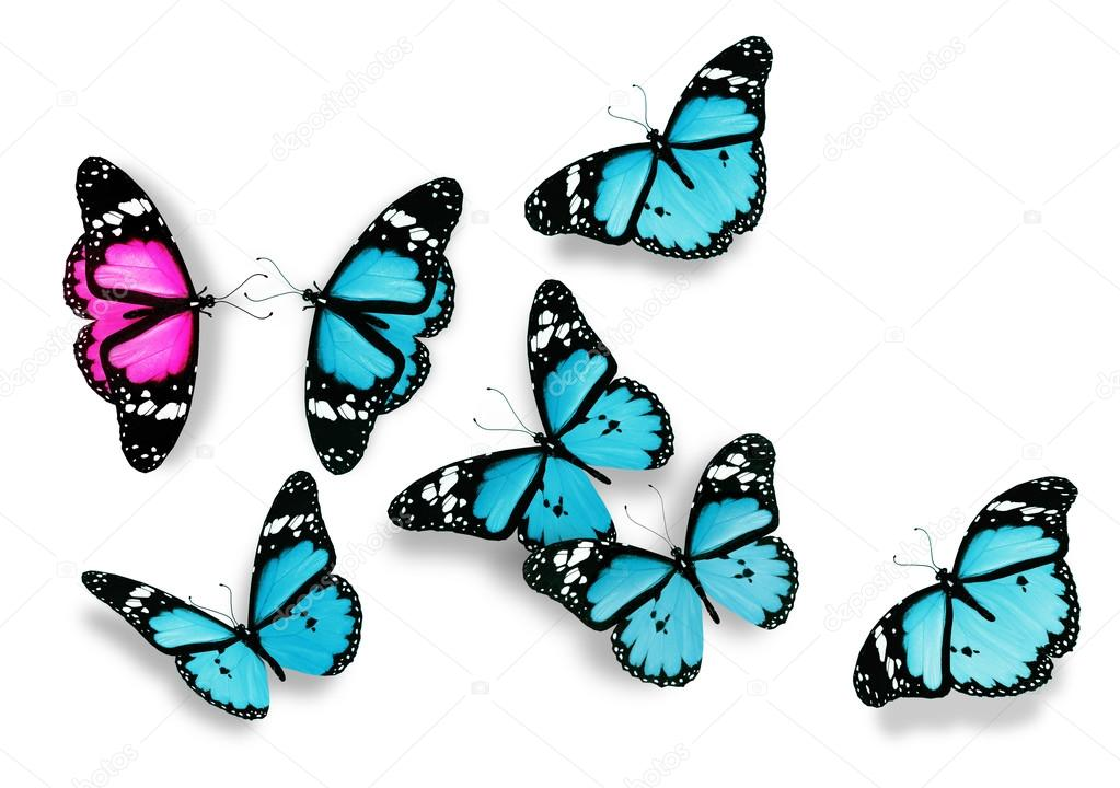 One pink and many blue butterflies, as concept of relations