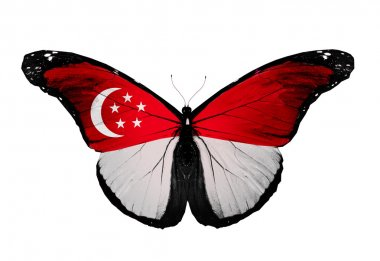 Singapore flag butterfly, isolated on white background