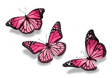 Three pink butterflies, isolated on white background