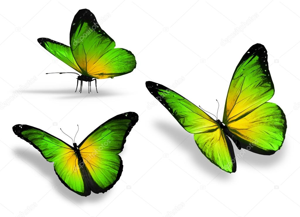 Three yellow green butterfly, isolated on white background