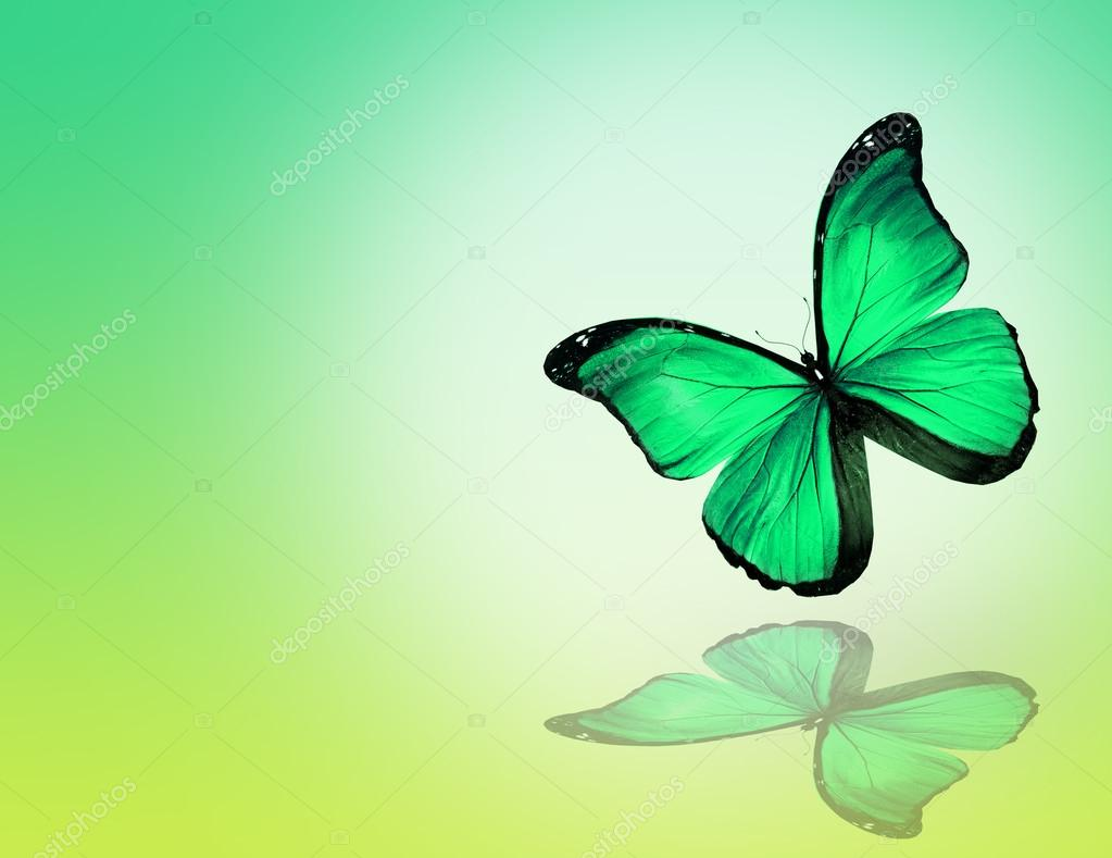 Green butterfly on green background