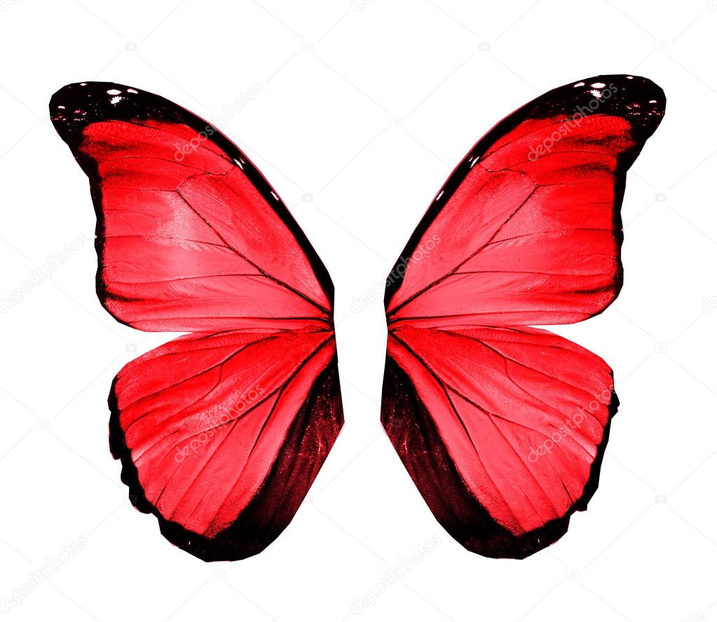 Red butterfly wings, isolated on white