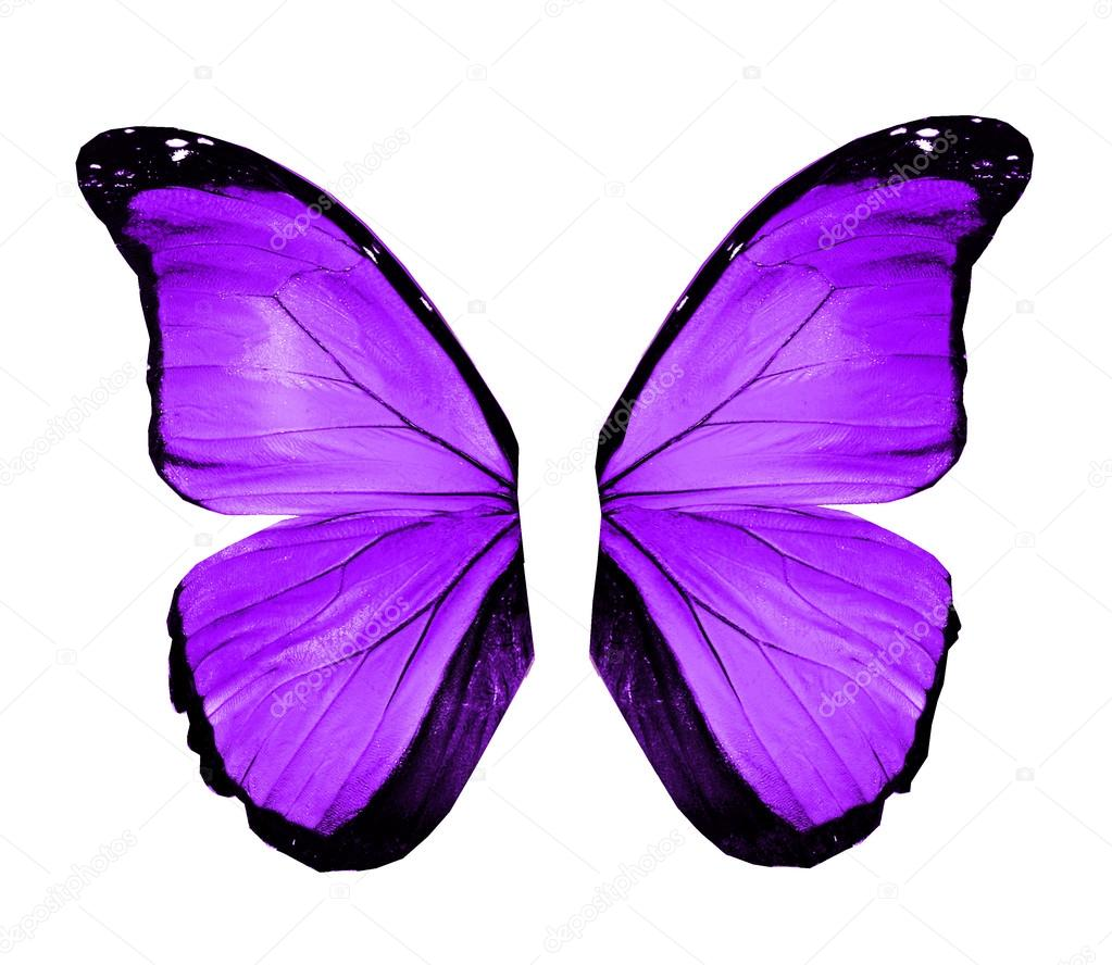 Violet butterfly wings, isolated on white