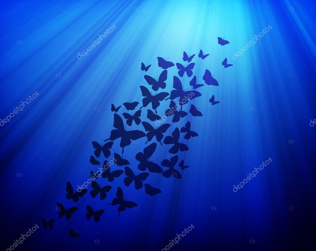 Dark blue background with butterflies