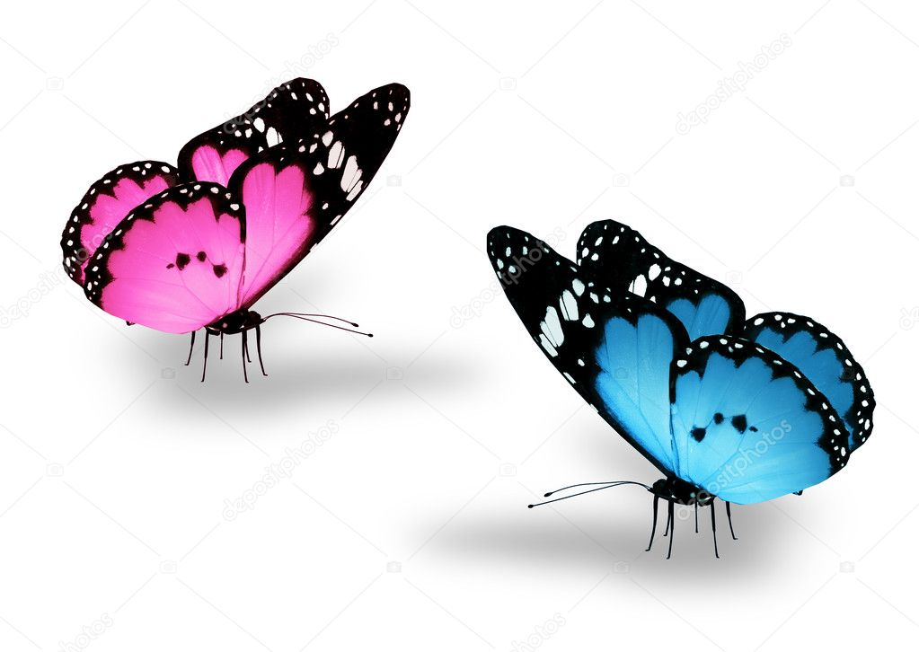 Two butterflies on white as concept of love