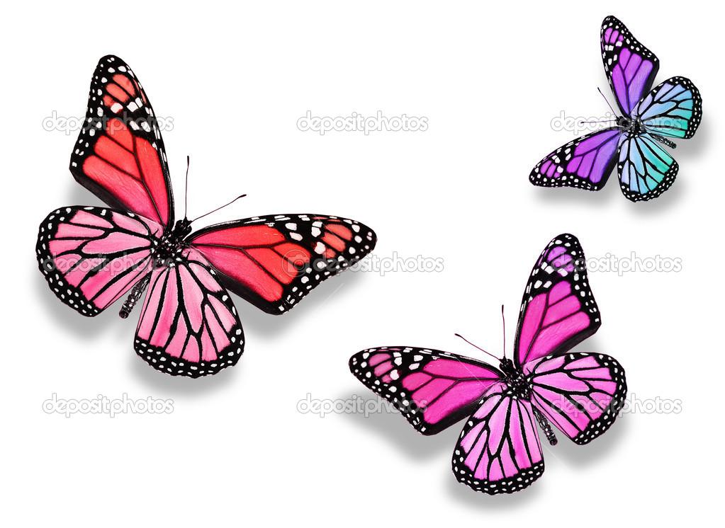 papillon de trois couleur, isolé sur fond blanc — Photographie