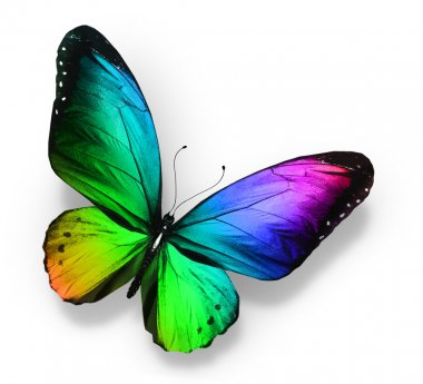 Color butterfly , isolated on white stock vector