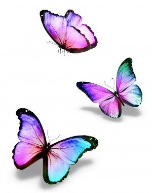"""Картина, постер, плакат, фотообои """"три цветные бабочки, изолированные на белом """", артикул 20907845"""