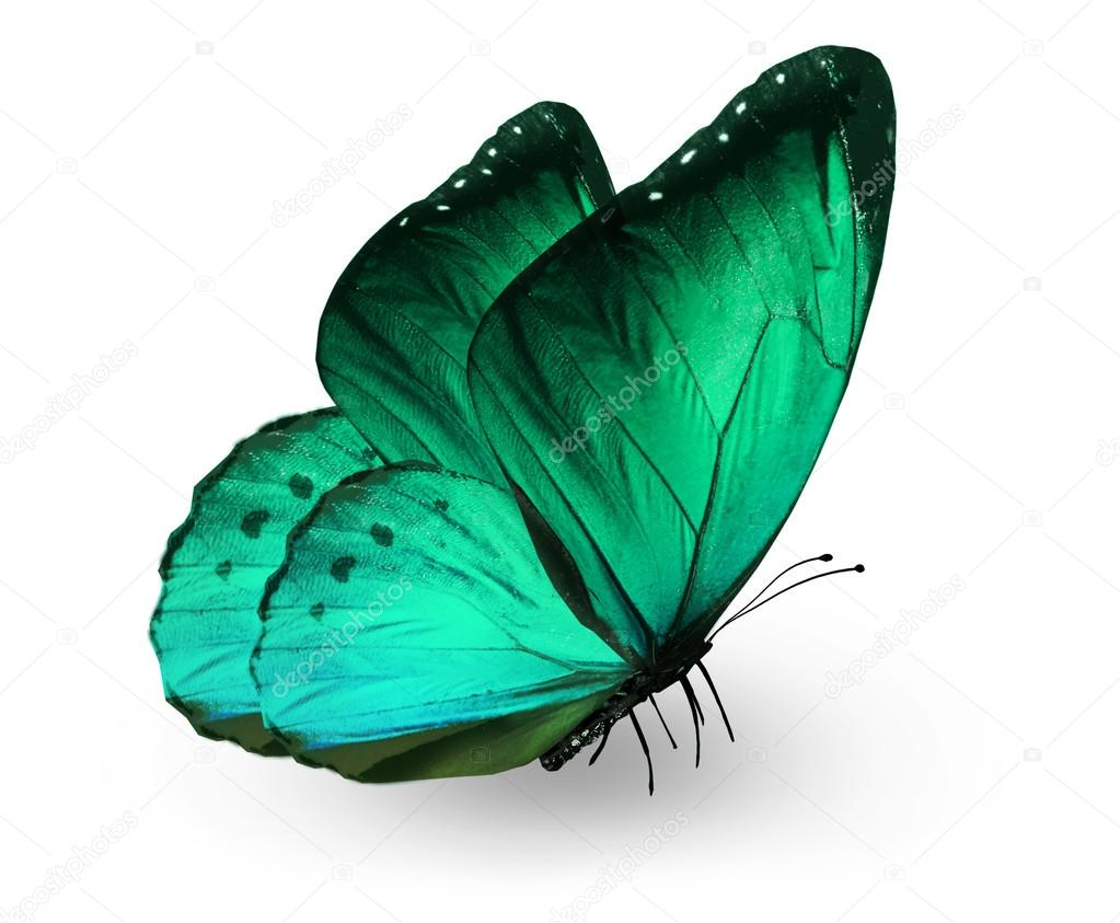 Green butterfly , isolated on white