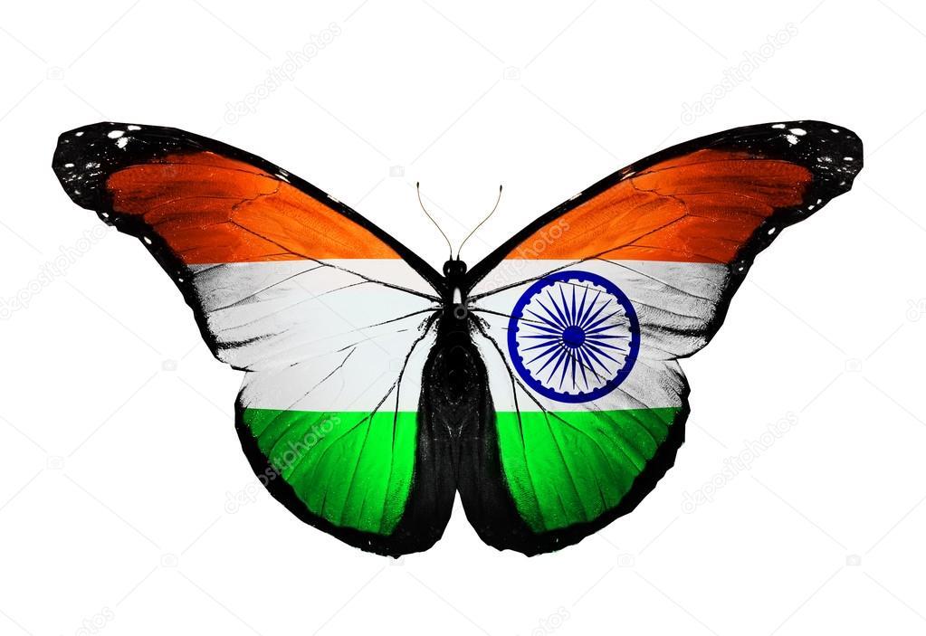 Indian Flag Butterflies: Indiska Flaggan Fjäril, Isolerad På Vit Bakgrund