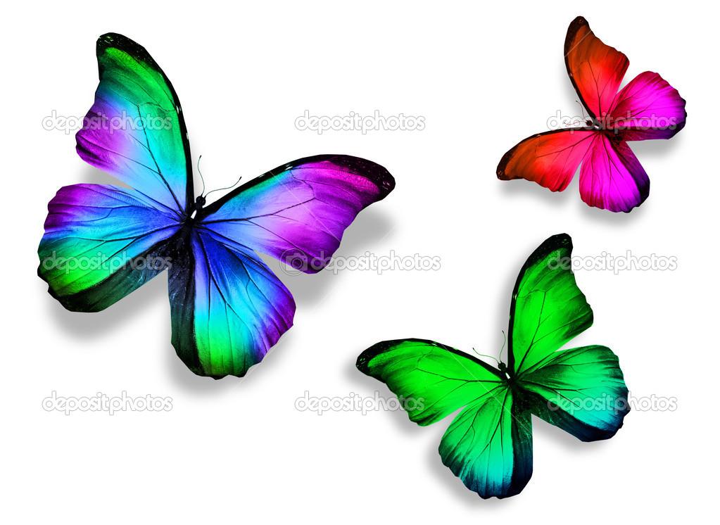 mariposa de tres colores, aislado sobre fondo blanco — Fotos de ...