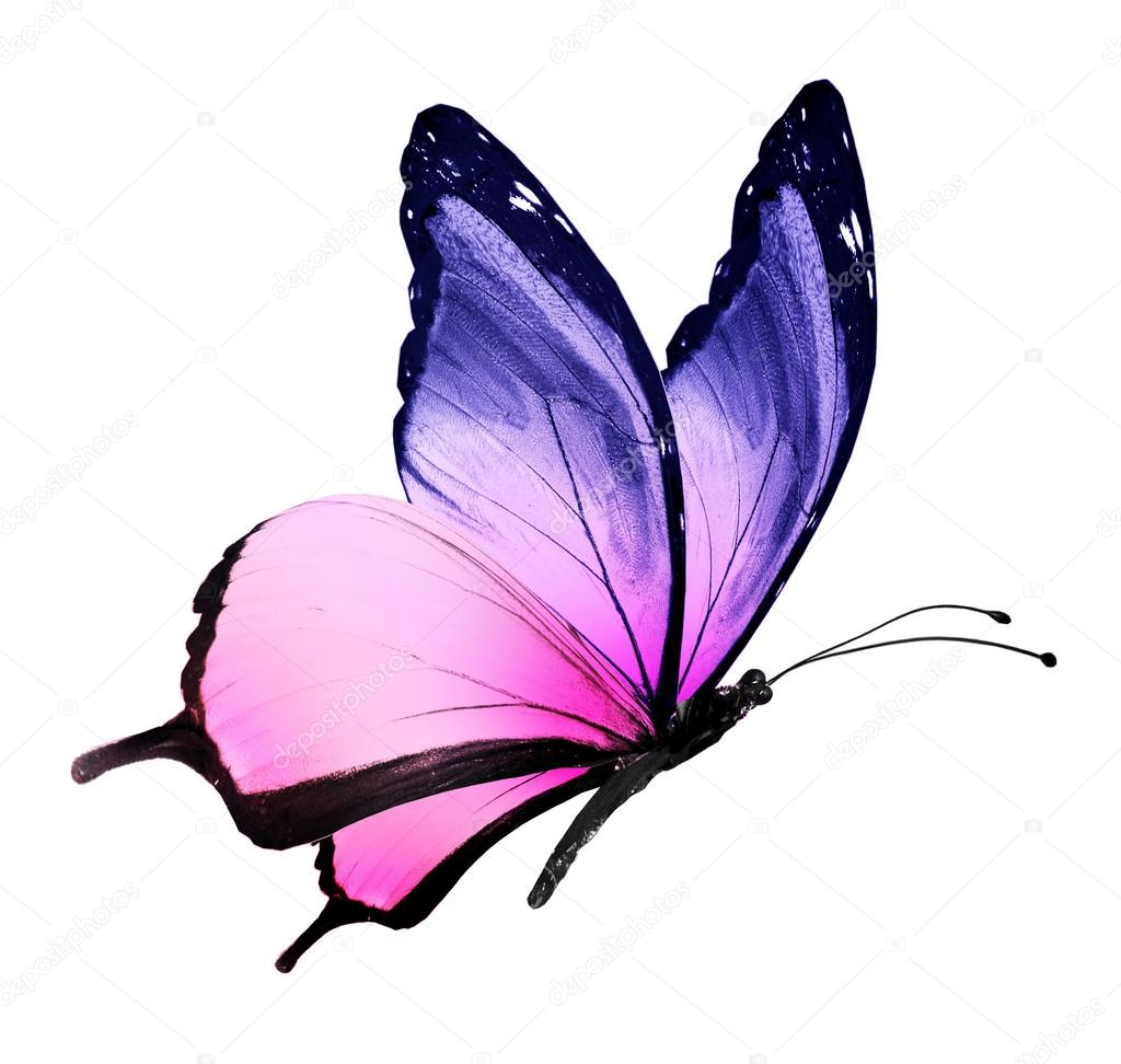 Color butterfly flying isolated on white stock photo - Couleur rose clair ...