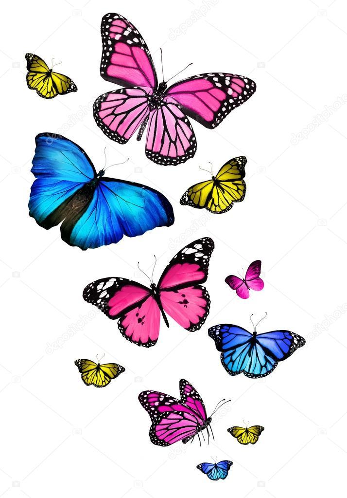 Imágenes: mariposas volando | muchos colores diferentes mariposas ...