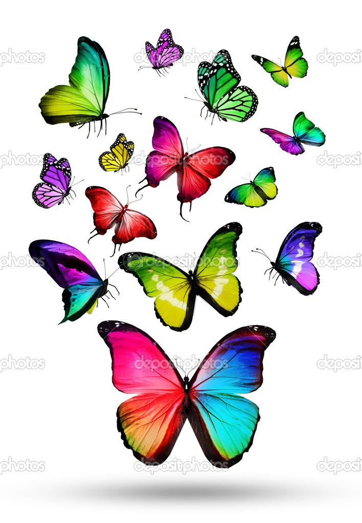 Fotos: mariposas de colores volando | muchos colores diferentes ...