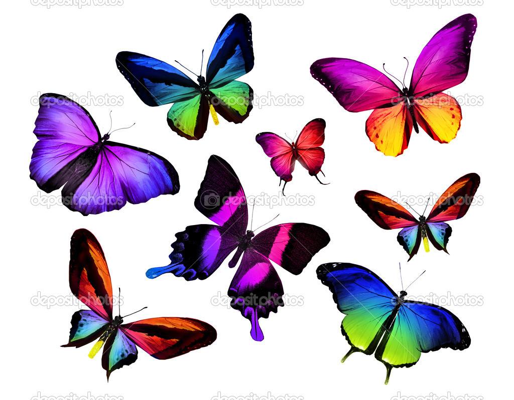Tante farfalle colorate foto stock sun tiger 40329901 for Foto farfalle colorate