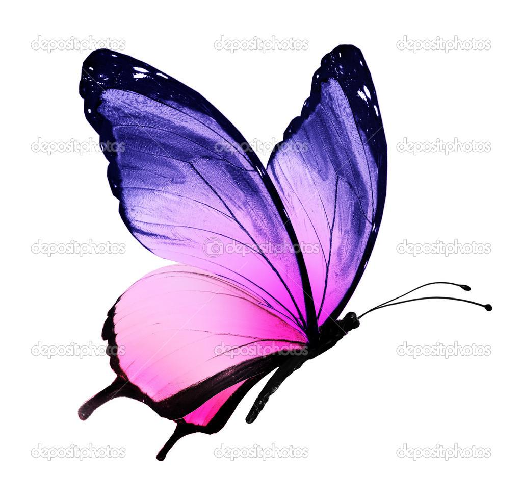 farfalla blu viola — Foto Stock © sun_tiger #40350487