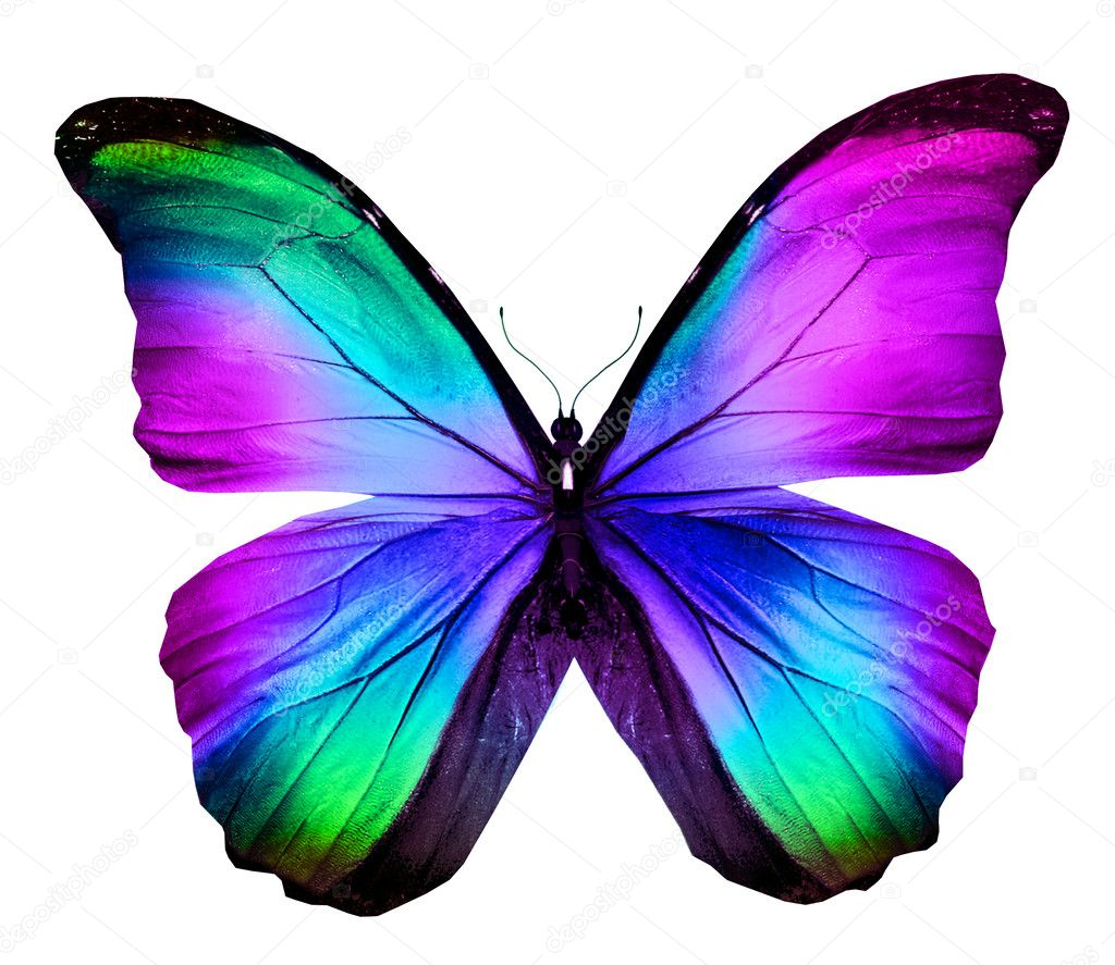 Colorful butterfly — Stock Photo © sun_tiger #40915909