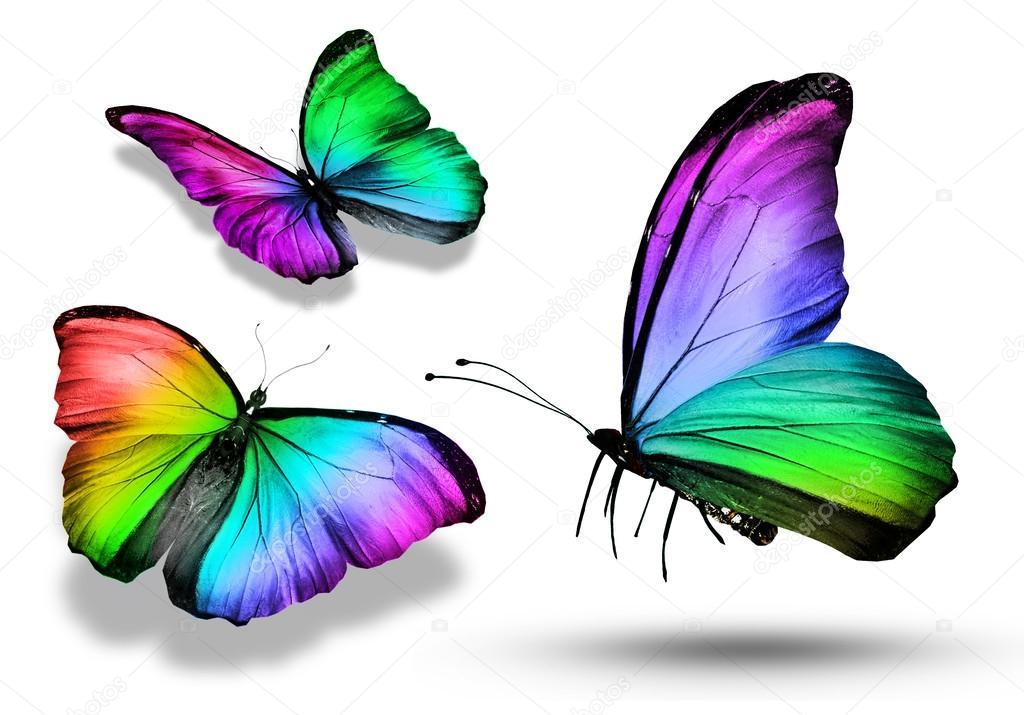tre farfalle colorate foto stock sun tiger 40916931