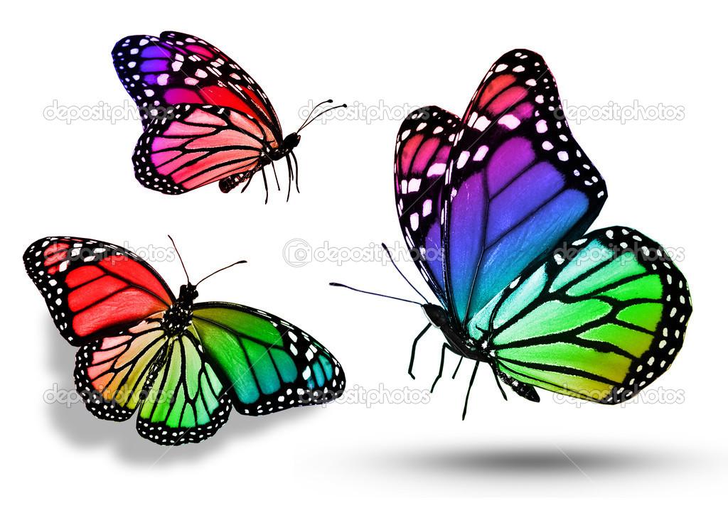 Imágenes: mariposas a color | tres mariposas de color — Foto de ...