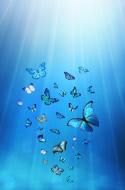 Butterflies on blue background