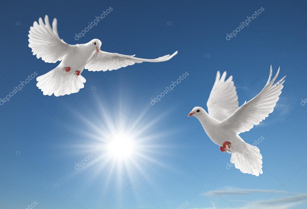 Dos Palomas Blancas Volando Dos Palomas Foto De Stock Ifong