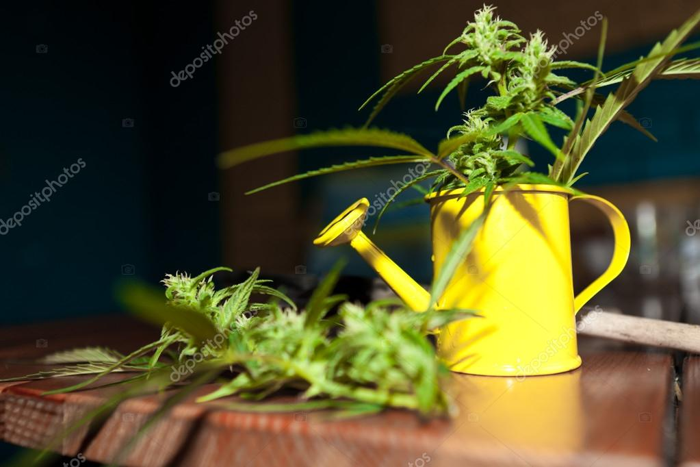 Cannabis plant with garden tools