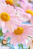 Fényképek százszorszép virág