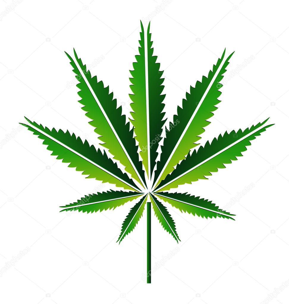 Green hemp leaf or cannabis leaf vector illustration