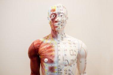 Mannequin body meridians