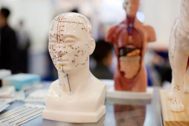 Meridians, the nervous system of the human body model,