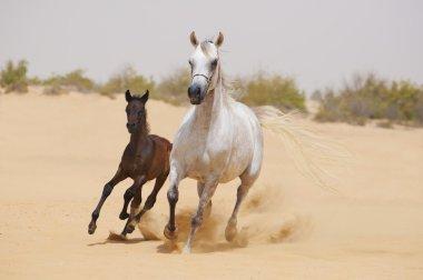 Horses in desert
