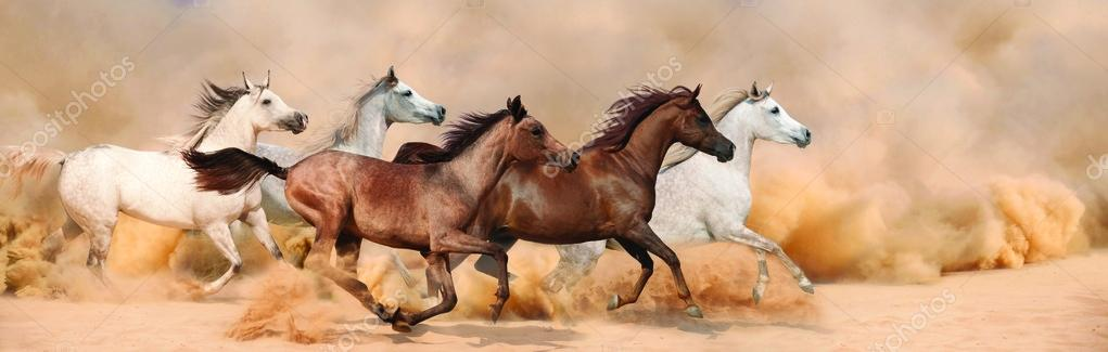 Herd gallops in the sand storm