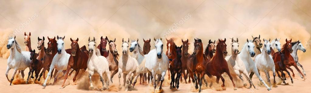 Horses herd running in the sand storm