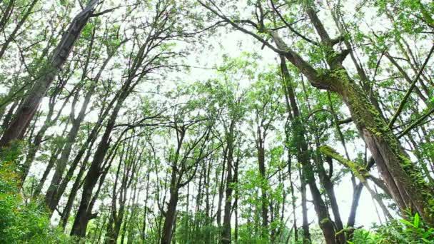 az erdei fák