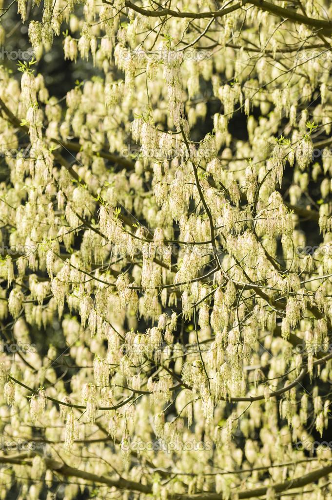 Yellow Hanging Flowers Stock Photo Alessandrozocc 44960303