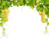 Fotografie Collage of vine leaves and yellow grapes
