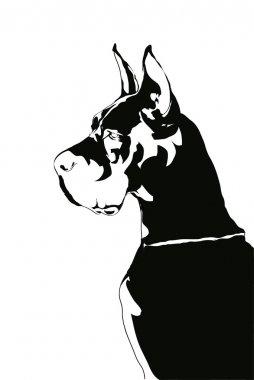 Harlequin Great Dane.