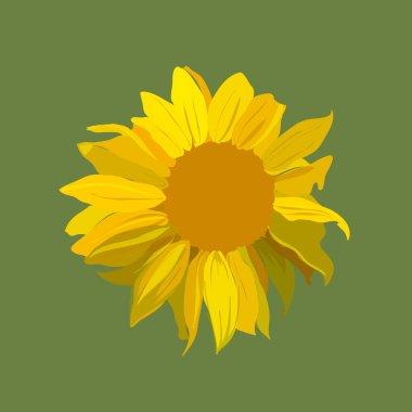 Sunflower vector illustration.