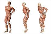 Rückenschmerzen, Rückenschmerzen
