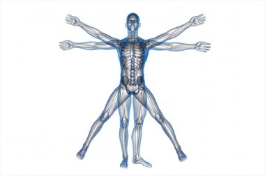 Human body of a Vitruvian man