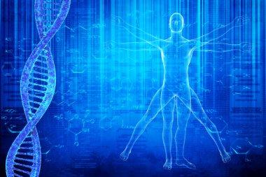 DNA molecules and vitruvian man