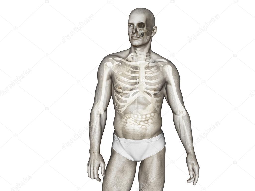 Anatomía del cuerpo humano — Foto de stock © vitstudio #35668519