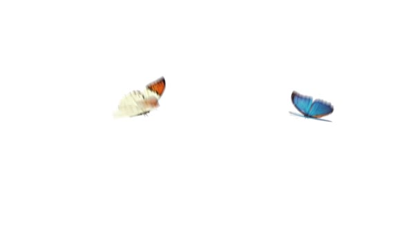 Two butterfly flying