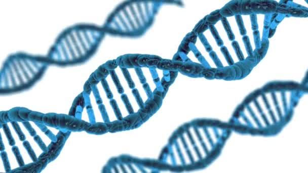 rotace molekuly DNA